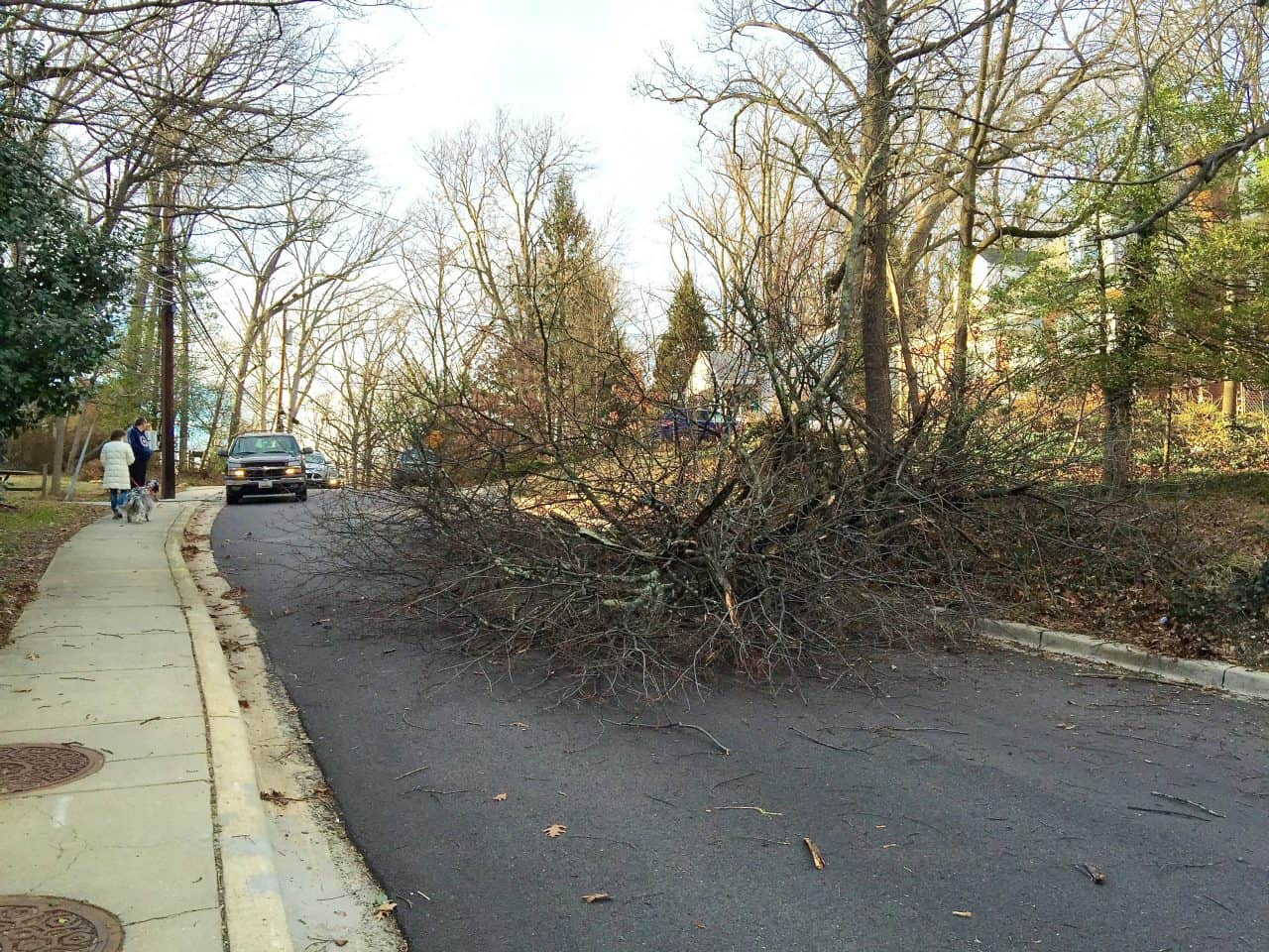 High winds taking down trees, wires around the area