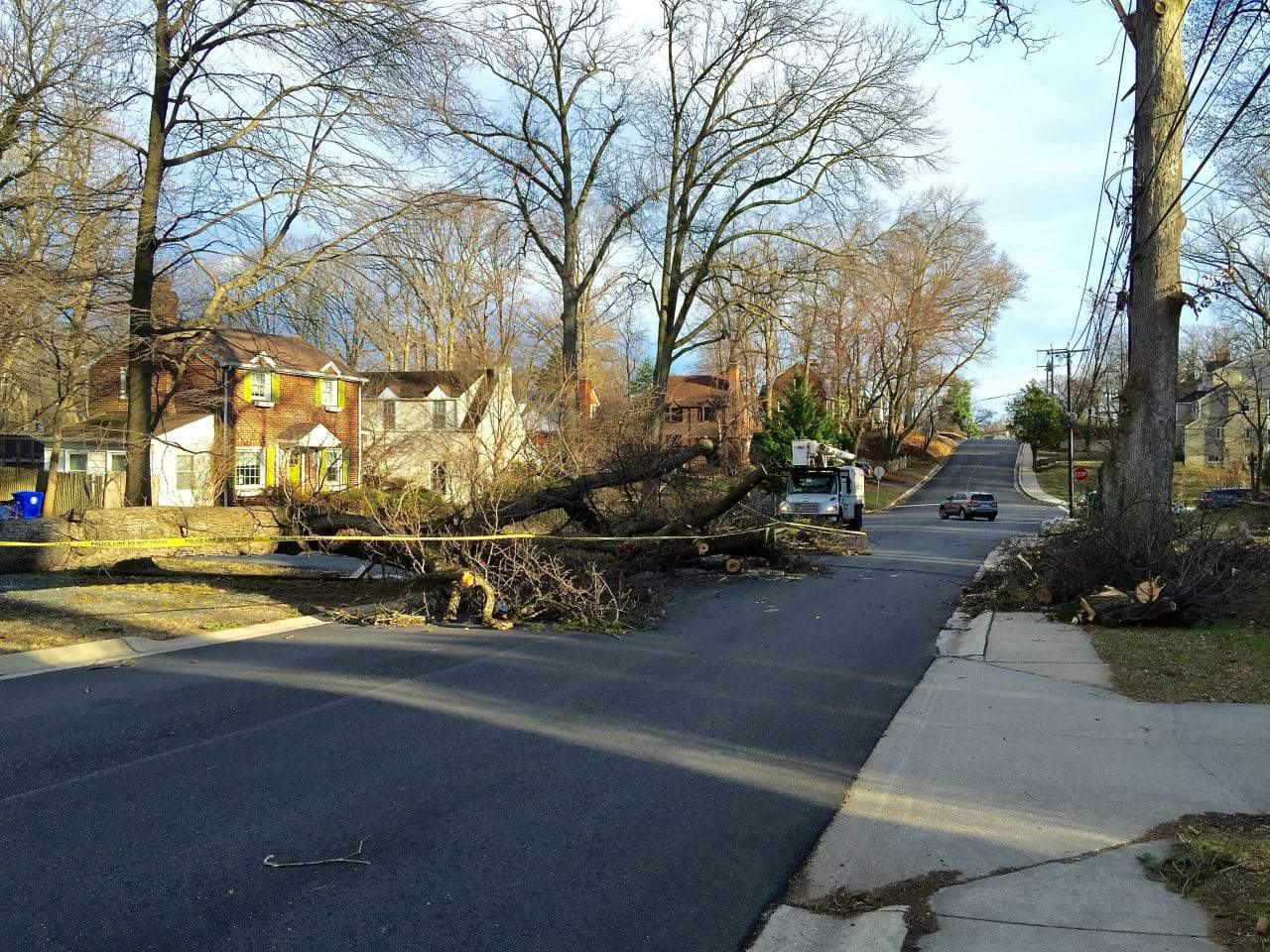 High winds taking down trees, wires around the area - Today's continuing high winds are taking down area trees and, in some cases, power lines, causing damage and disrupting traffic.
