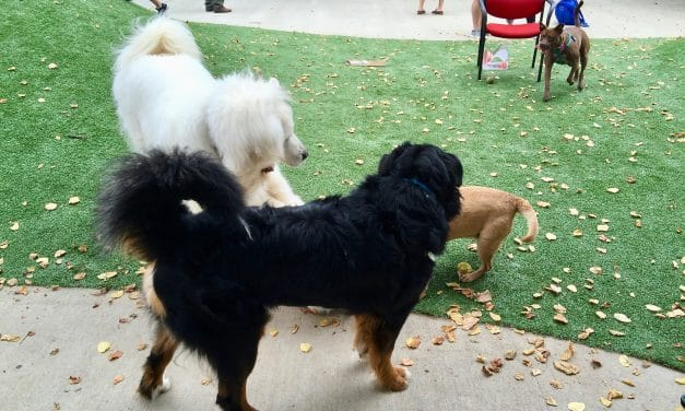Ellsworth Dog Park Closing for Maintenance
