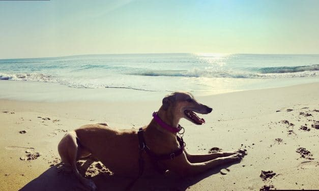 Greyhound Welfare Meet and Greet