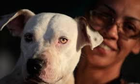 Humane Rescue Alliance Adoption Event