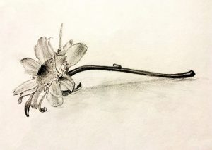 Events - Pick up a pencil and learn to draw in this 8-week class designed to teach the fundamentals of drawing. Whether it's your first time drawing or you want to learn some techniques to upgrade your artistic style, this class will teach you the basics needed to create works of art in pencil and ink. Class meets for 8 sessions. This class is a prerequisite for Drawing II.