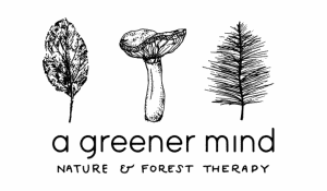 Events - Take time out to let nature in on this 2 1/2 hour guided forest bathing session.
